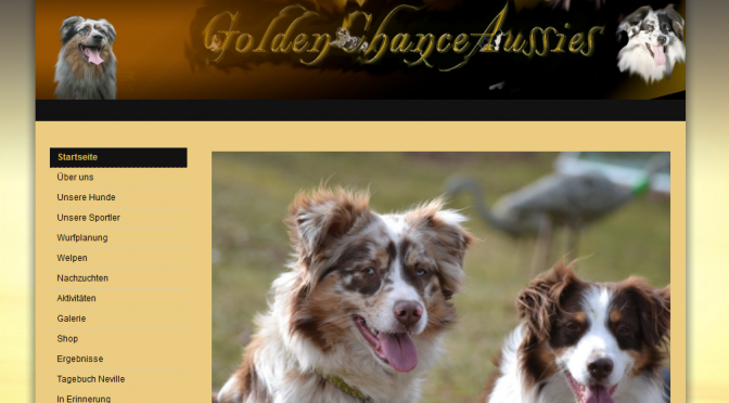 Golden-Chance-Aussies